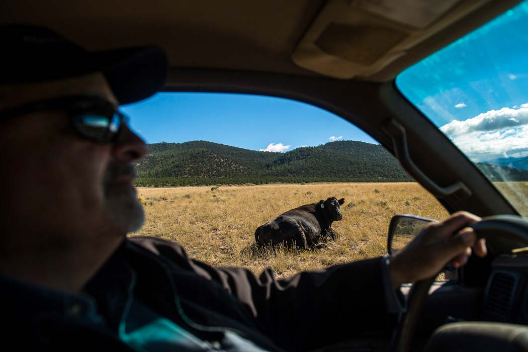 Rancher Bobby Ortega looks for his grazing cattle in Rio Grande del Norte National Monument